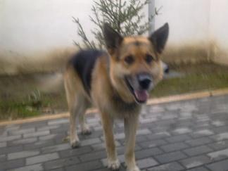 Będkowo pies (2).jpeg